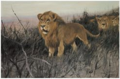 Lions in the Burnt Steppe | Wilhelm Kuhnert | Oil Painting