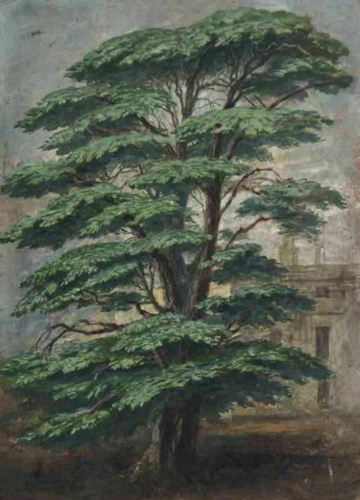Cedar at Bevois Mount Where Pope Sat | Albert Durer Lucas | Oil Painting