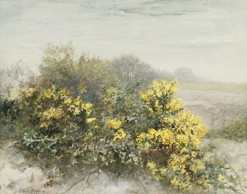 Gorse in Flower on the Isle of Wight | Arthur Hopkins | Oil Painting