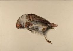 Study of a dead bird | John Ruskin | Oil Painting