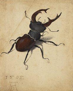 Stag Beetle | Albrecht Durer | Oil Painting