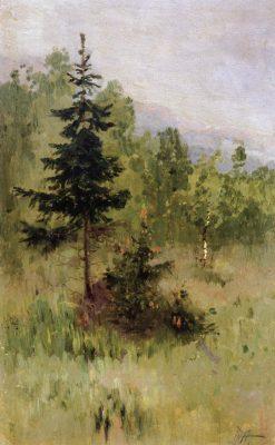 Fir Tree | Mikhail Vasilevich Nesterov | Oil Painting