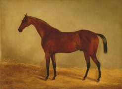 Study of the Horse B. G.