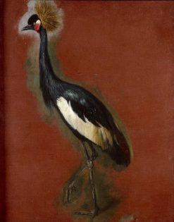 Study of a Crowned Crane | Pieter Boel | Oil Painting