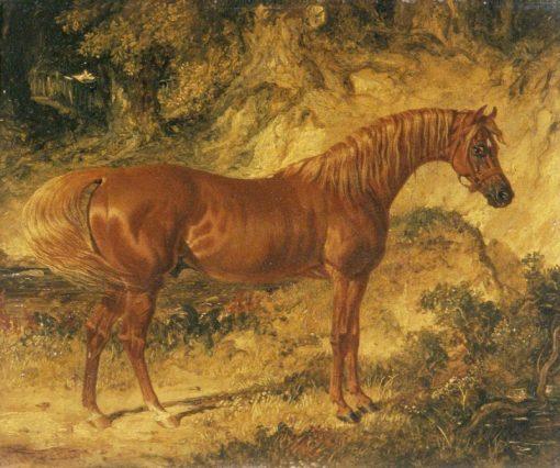 The Racehorse Actaeon   John Frederick Herring
