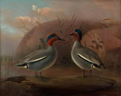 Two Male Teals by the Water | Ferdinand von Wright | Oil Painting