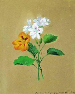 Nasturtiums | Fedor Tolstoy | Oil Painting