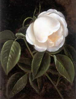 A white rose | Johan Laurentz | Oil Painting