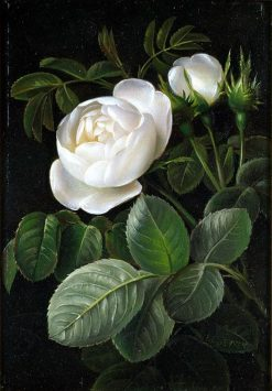 White Rose | Johan Laurentz | Oil Painting