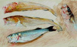 Study of Four Fish for The Mackerel Nets | William Shackleton | Oil Painting