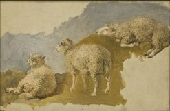 Three Sheep. Study | Kilian Christoffer Zoll | Oil Painting