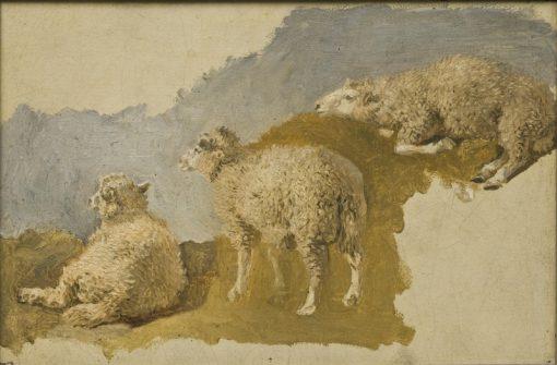 Three Sheep. Study   Kilian Christoffer Zoll   Oil Painting