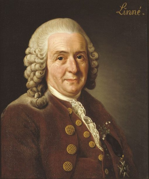 Carl von Linne | Alexander Roslin | Oil Painting