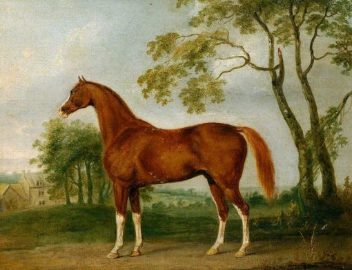 Grosvenor Arabian | John Nost Sartorius | Oil Painting