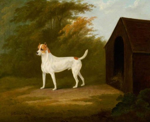 An Old English Terrier | John Nost Sartorius | Oil Painting