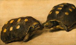 Study of Two Brazilian Tortoises | Albert Eckhout | Oil Painting