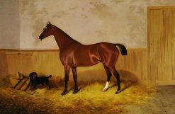 Study of a Horse | Colin Graeme Roe | Oil Painting