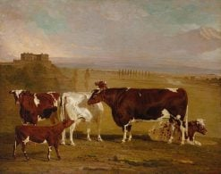Portraits of Cattle of the Improved Short-Horned Breed