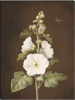 Stockrose | Barbara Regina  Dietzsch | Oil Painting