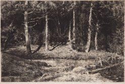 Birch Trees | Ivan Ivanovich Shishkin | Oil Painting