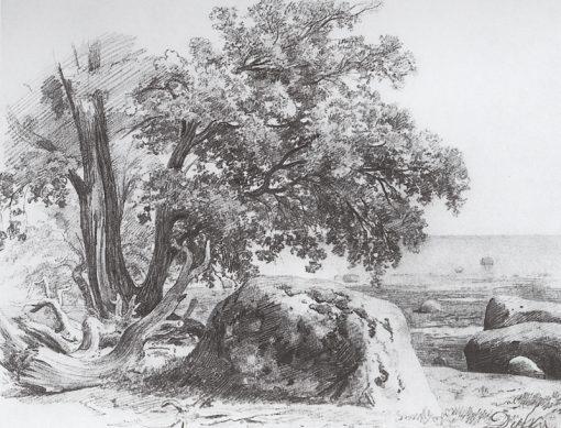 An Oak Tree on the Gulf of Finland | Ivan Ivanovich Shishkin | Oil Painting