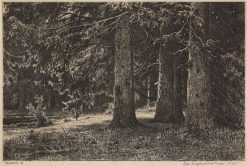 Fir Trees | Ivan Ivanovich Shishkin | Oil Painting