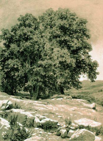 Trees in Crimea   Ivan Ivanovich Shishkin   Oil Painting