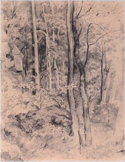 Forest   Ivan Ivanovich Shishkin   Oil Painting