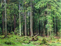 Forest in Mordvinovo | Ivan Ivanovich Shishkin | Oil Painting