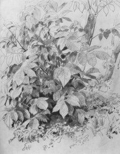 Undergrowth | Ivan Ivanovich Shishkin | Oil Painting