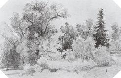 Forest Edge | Ivan Ivanovich Shishkin | Oil Painting