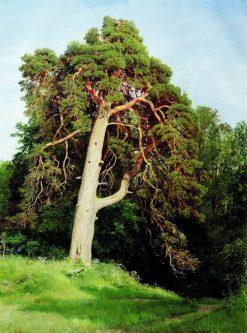 Pine Tree | Ivan Ivanovich Shishkin | Oil Painting