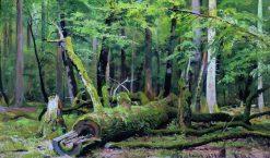 A Fallen Oak | Ivan Ivanovich Shishkin | Oil Painting