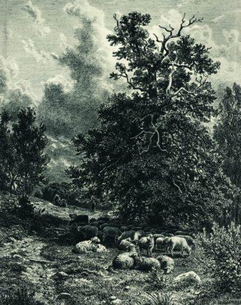 Sheep on the Forest Edge | Ivan Ivanovich Shishkin | Oil Painting