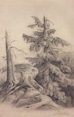 Fir Tree | Alexei Kondratyevich Savrasov | Oil Painting