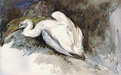 White Crane shot at Xanthus | William James Muller | Oil Painting