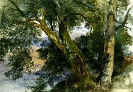 Sketch of trees (possibly Leigh Woods by the Avon) | William James Muller | Oil Painting