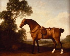 A Saddled Bay Hunter | George Stubbs | Oil Painting