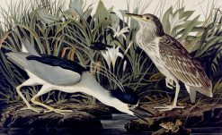 Night Heron or Quabird | John James Audubon | Oil Painting