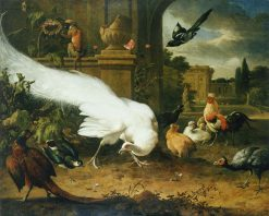 The White Peacock   Melchior d'Hondecoeter   Oil Painting