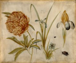 Flowers and Beetles | Hans Hoffmann | Oil Painting
