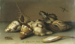 Still Life with Shells | Balthasar van der Ast | Oil Painting