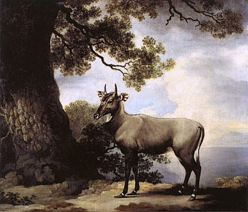 The Nilgai(also known as Nylghau) | George Stubbs | Oil Painting
