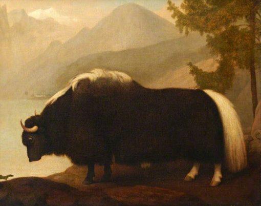 Yak   George Stubbs   Oil Painting