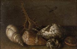 Shells | Balthasar van der Ast | Oil Painting