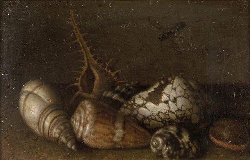 Shells | Balthasar van der Ast | Oil Painting