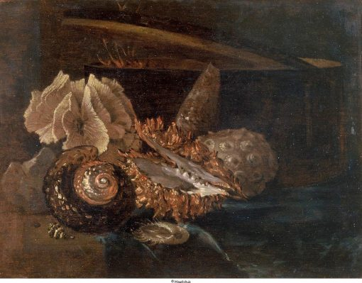 Still Life: Shell and Coral | Willem Kalf | Oil Painting