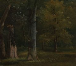 Trees in the Bois de Boulogne