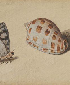 An Arrowhead Blue Butterfly and a Scotch Bonnet Sea Shell | Balthasar van der Ast | Oil Painting
