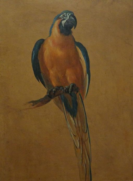 Study of a Parrot   Jean Baptiste Oudry   Oil Painting